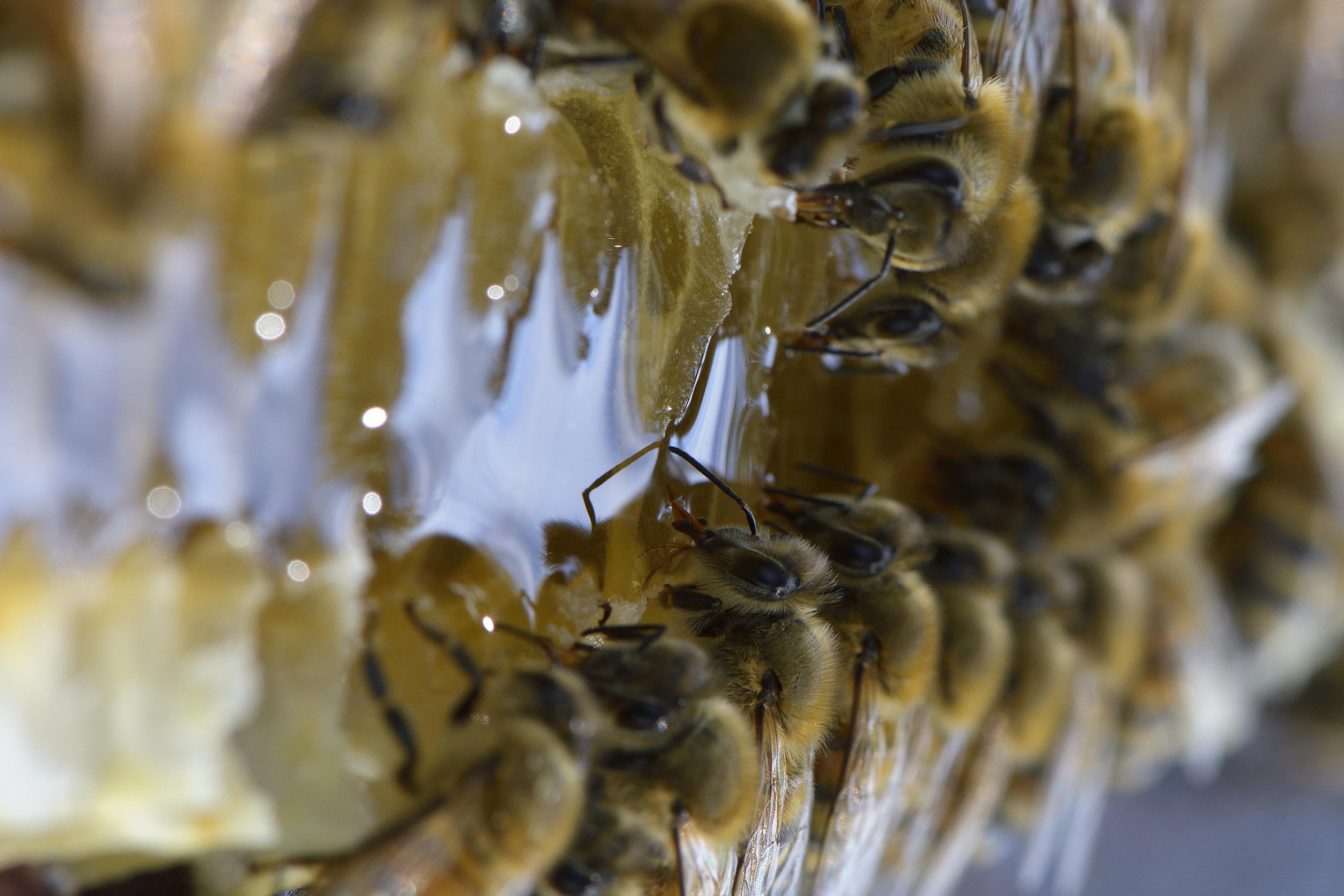 abeilles 17 vauvarin