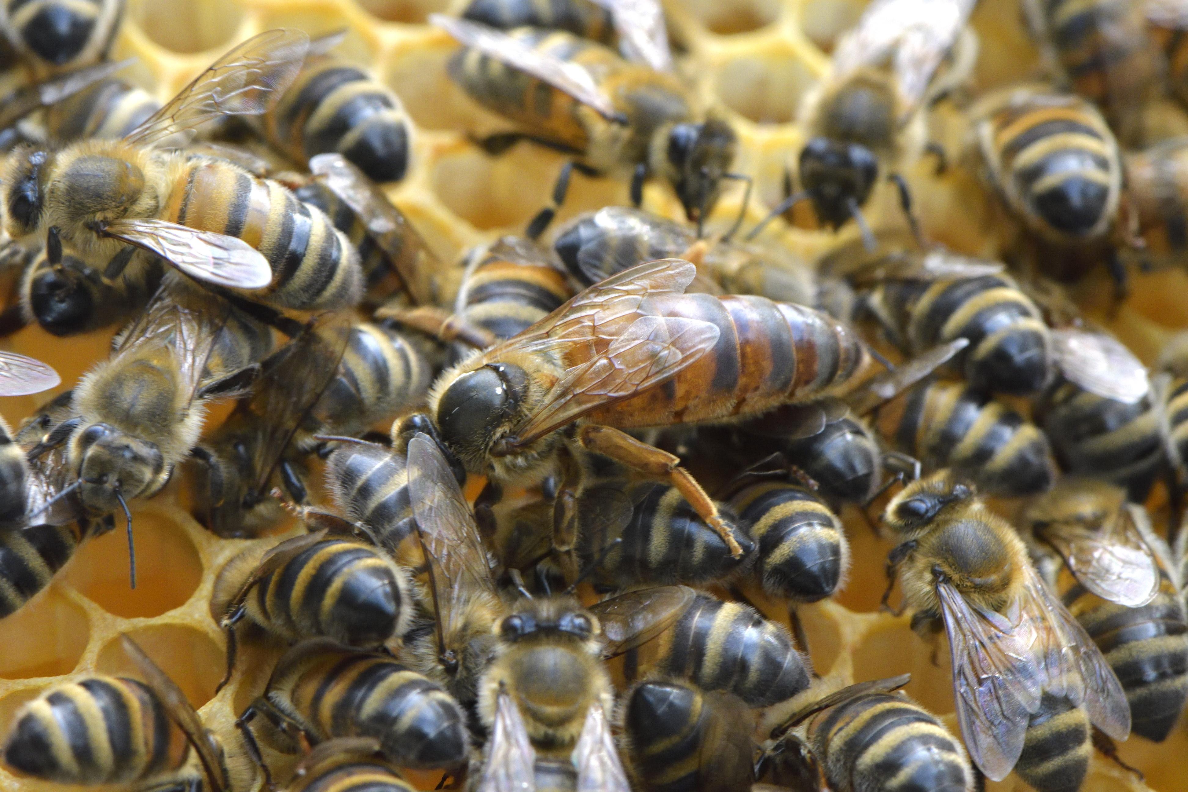 abeilles 29 vauvarin