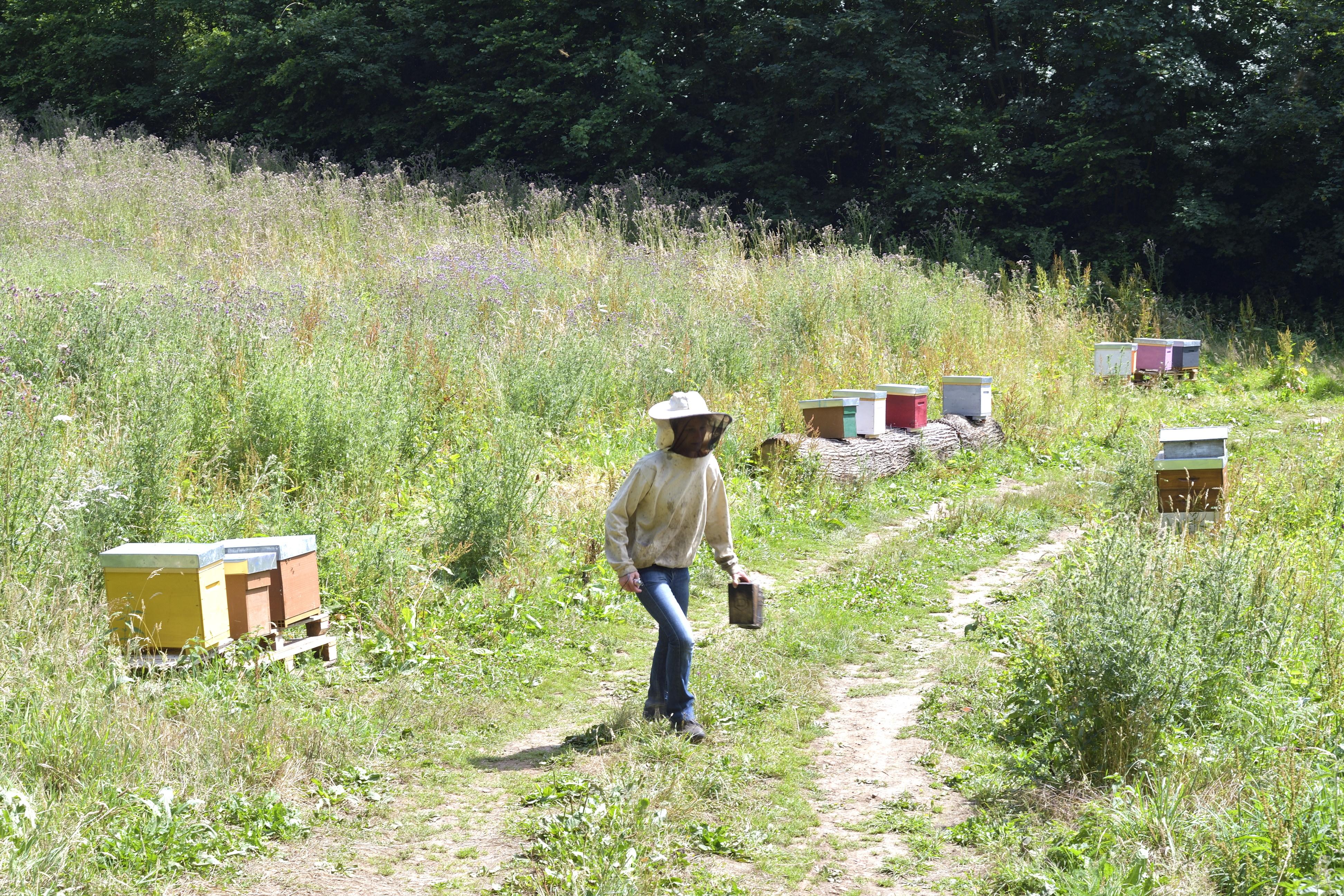 abeilles 13 vauvarin