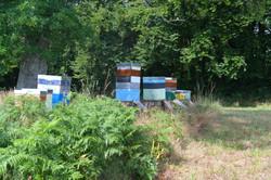 abeilles 35 vauvarin