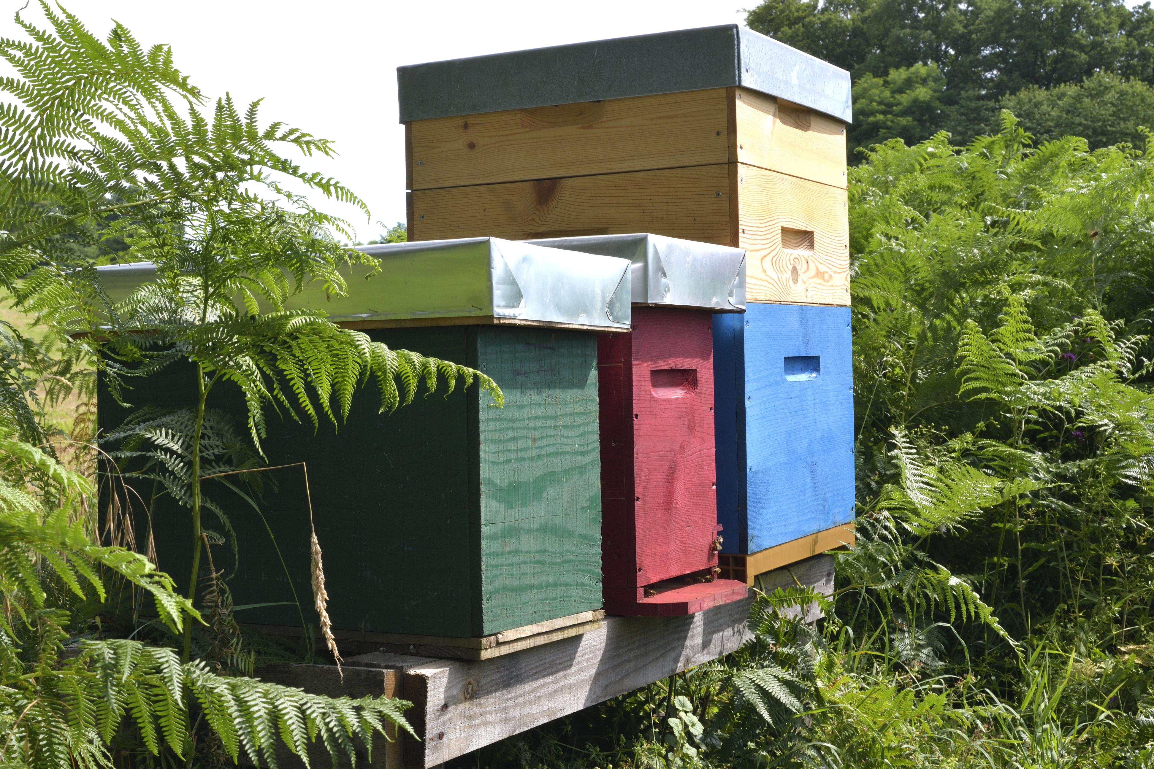 abeilles 34 vauvarin