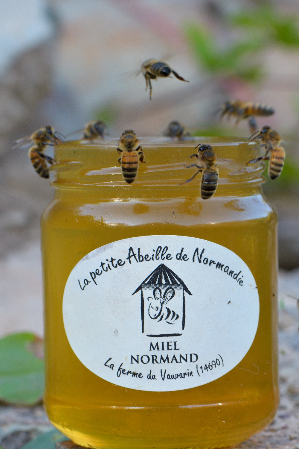 pot miel abeilles 45 vauvarin_edited