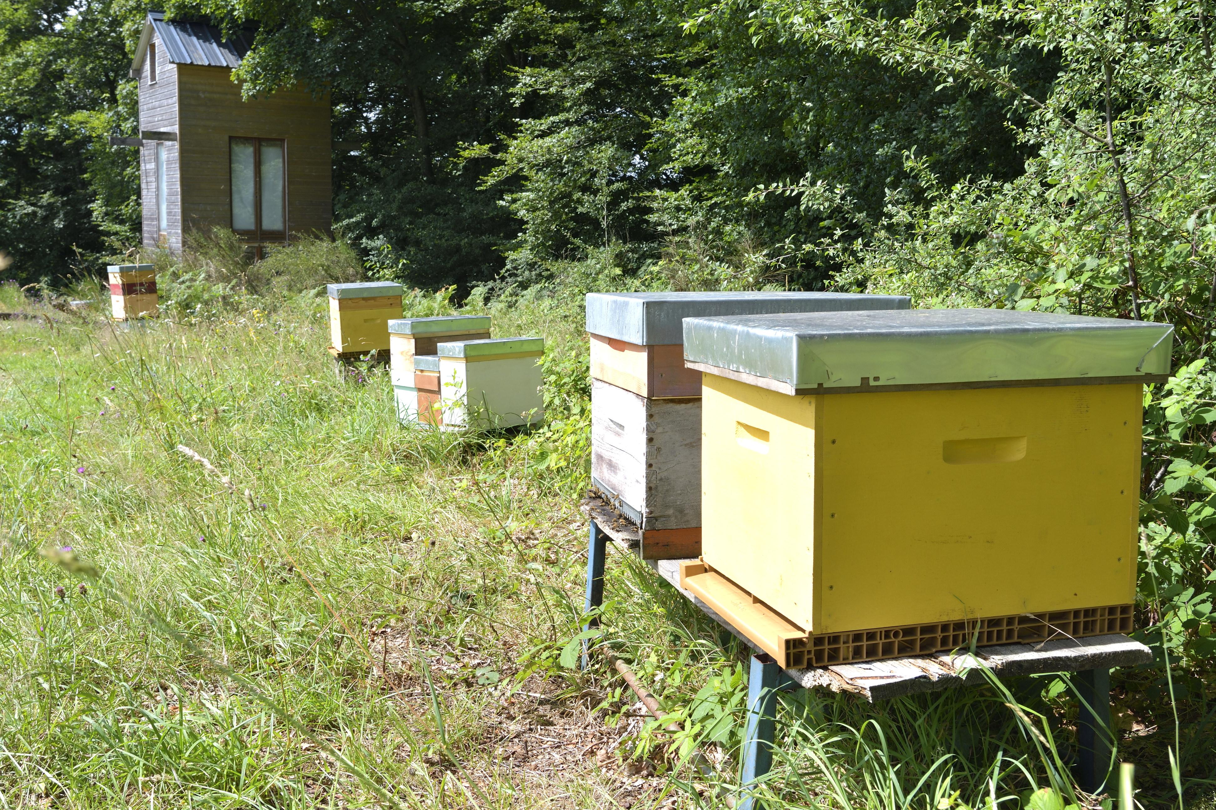 abeilles 15 vauvarin
