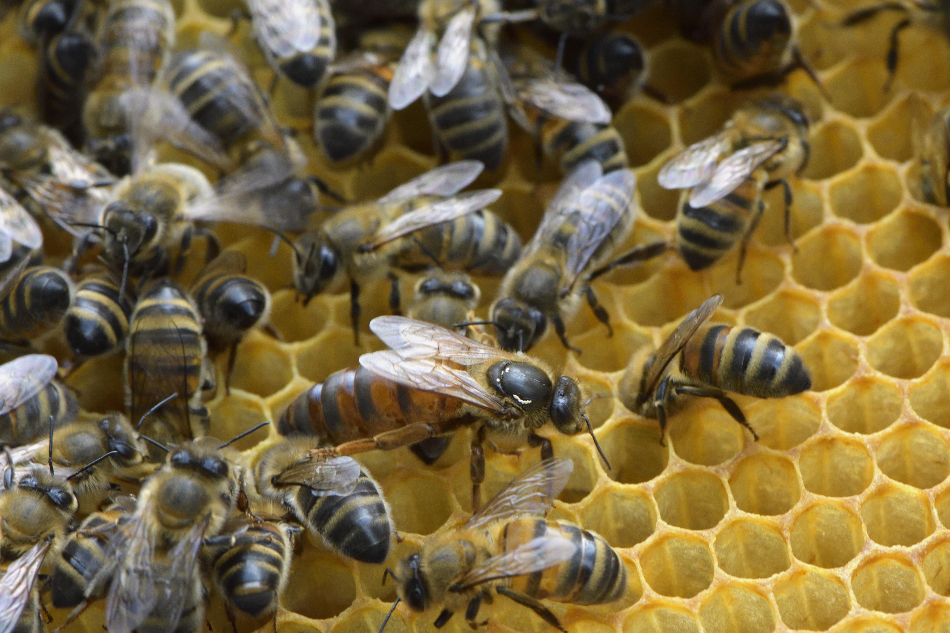 abeilles 27 vauvarin