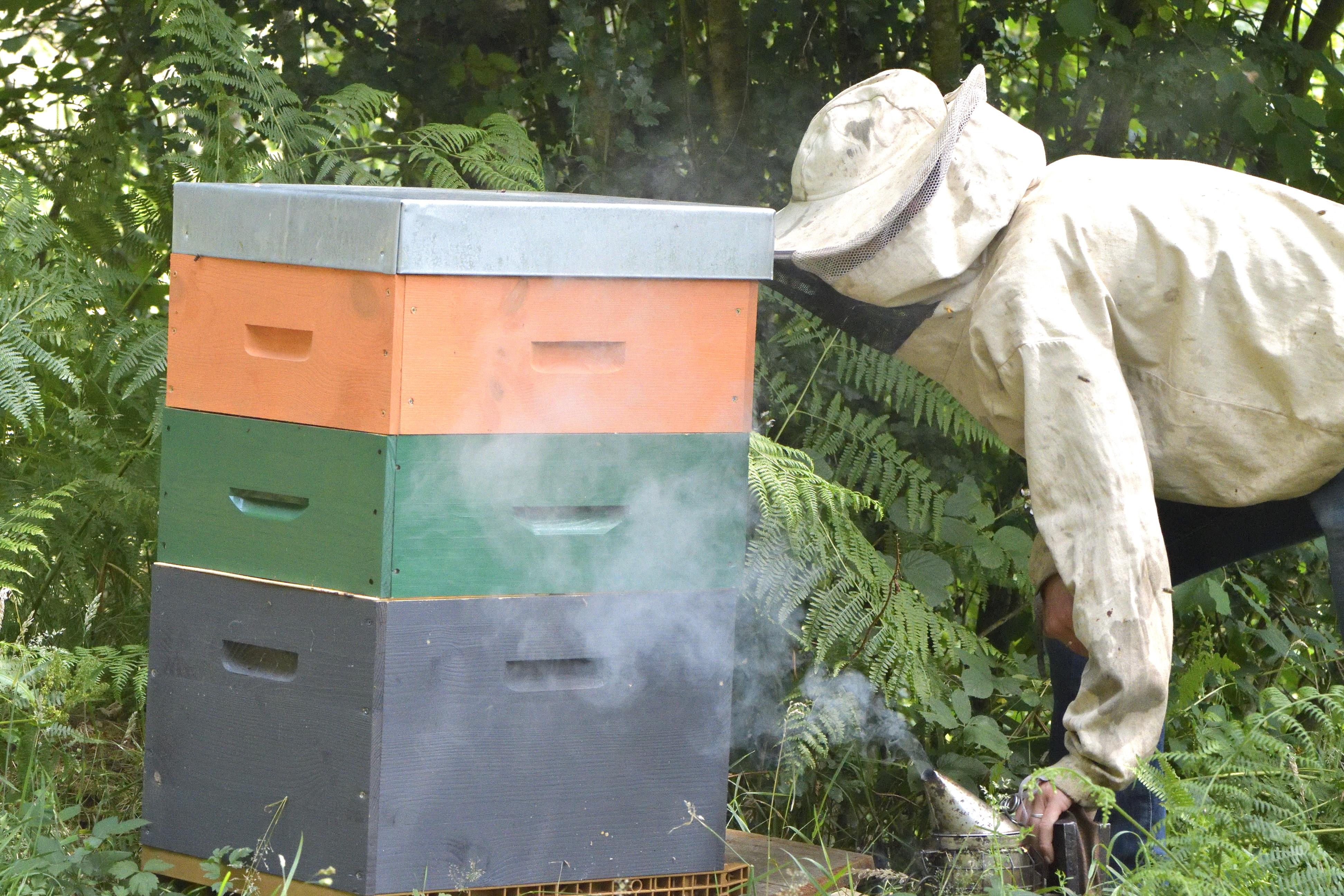 abeilles 9 vauvarin