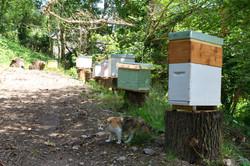 abeilles 12 vauvarin