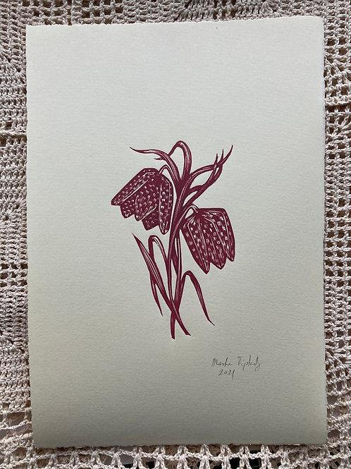 Primavera. Fritillaria.
