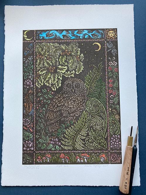 Night owl (coloured)