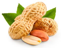Dried peanuts in closeup .jpg