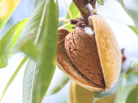 Awesome almonds: five fun facts