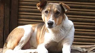 cachorro-abandonado-2.png