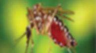 Norte lidera o ranking da dengue.jpg
