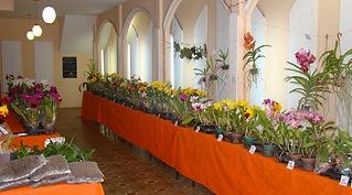 Exposição-de-Orquídeas-orquidário-Lumani
