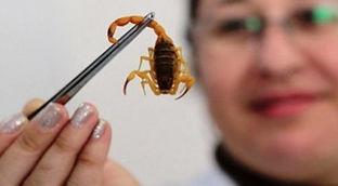 escorpião-divulgação-2-606x266.jpg