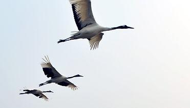 20out2013---aves-sobrevoam-o-estuario-do