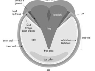Natural Horse Care – Why our hooves are 'bare'