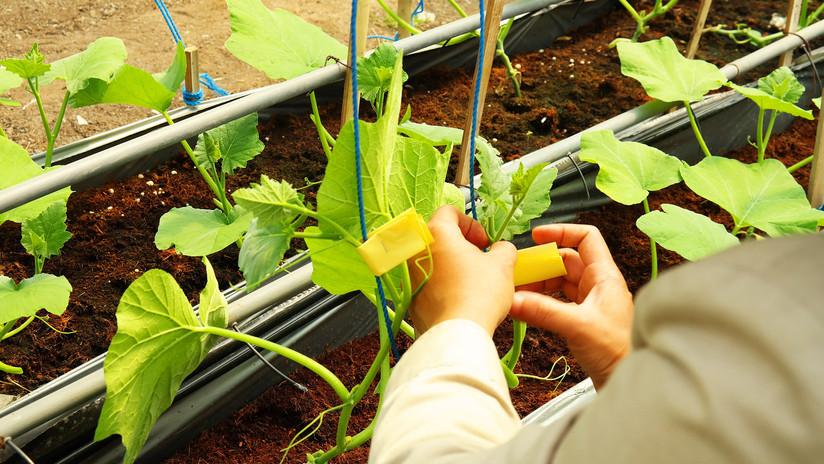 SMK model pertanian.jpg