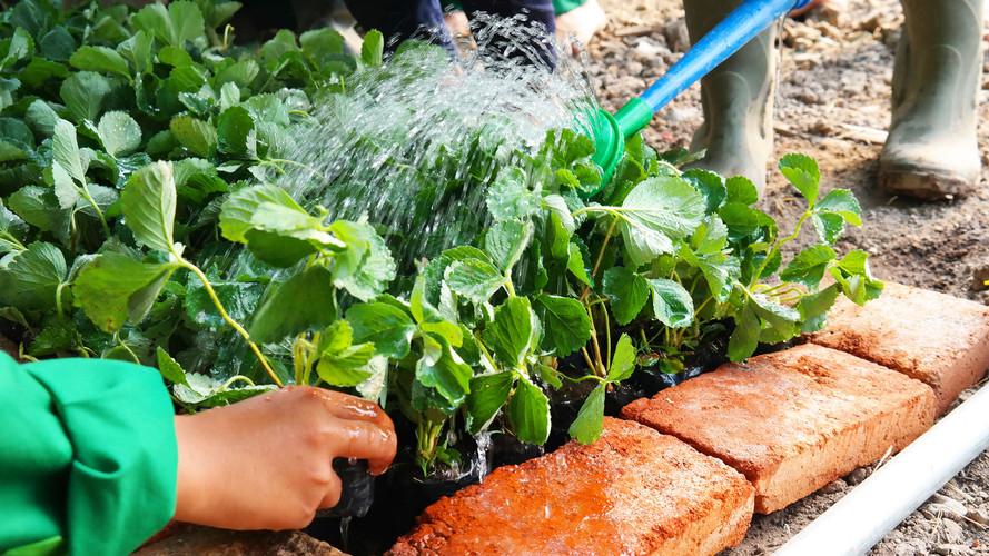 SMK model pertanian 2.jpg