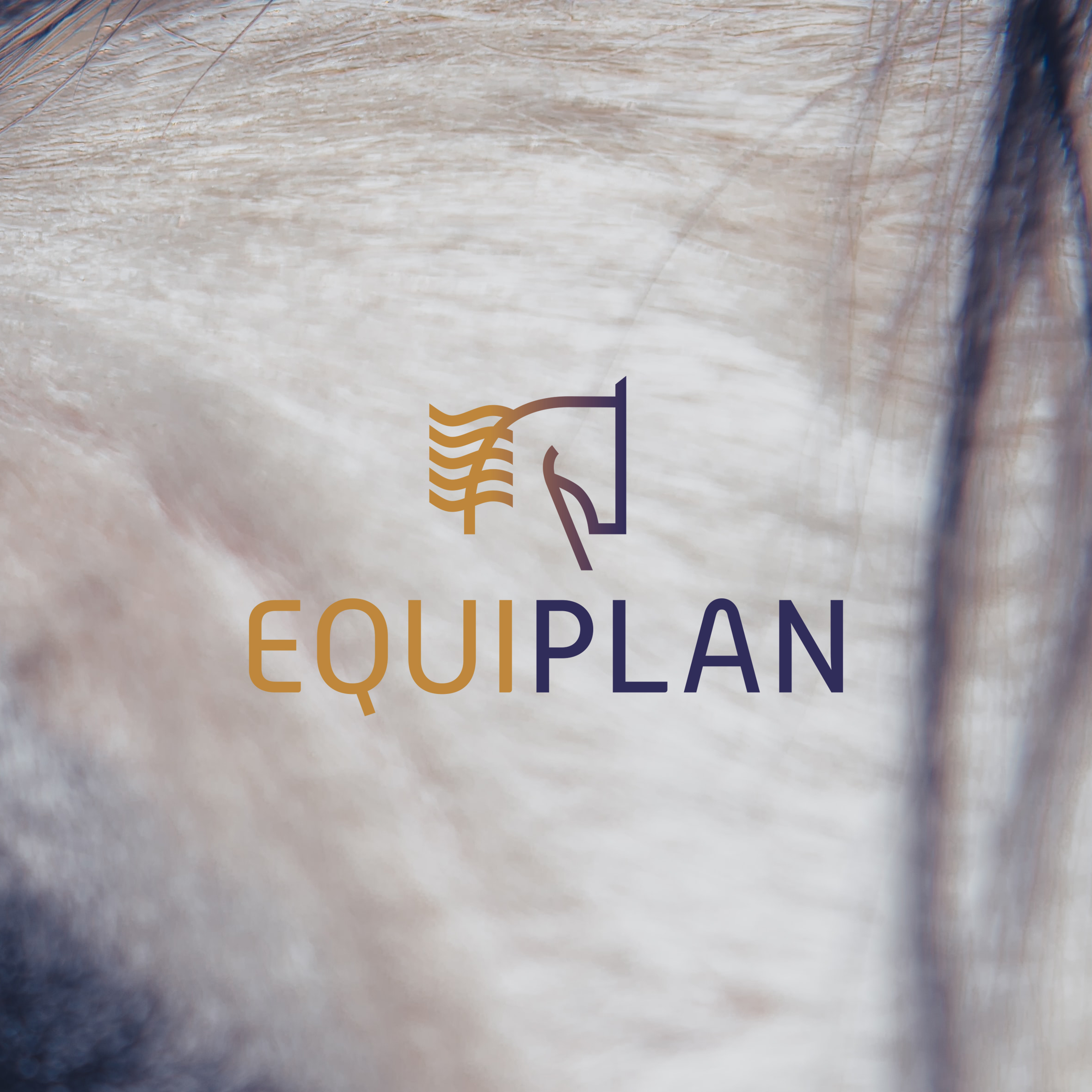 Logo ontwerp Equiplan
