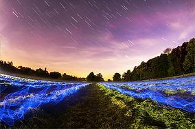 energetic-forest-field.jpg
