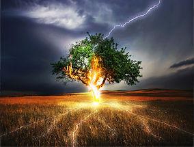 light-within-tree.jpg