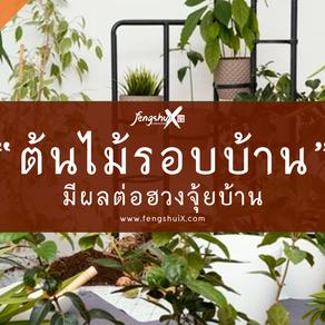 ปลูกต้นไม้รอบบ้าน อย่าลืมศาสตร์แห่งฮวงจุ้ยบ้านที่บ่งบอกถึงโชคลาภ