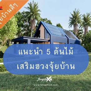 อยากมีฮวงจุ้ยบ้านดี ๆ แนะนำ 5 ต้นไม้เสริมฮวงจุ้ยบ้าน ปลูกกันเลย