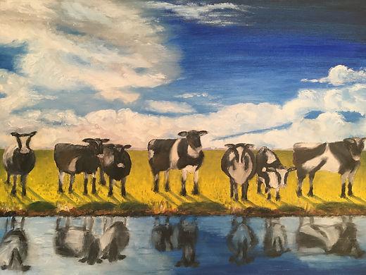 Curious Cows.JPG