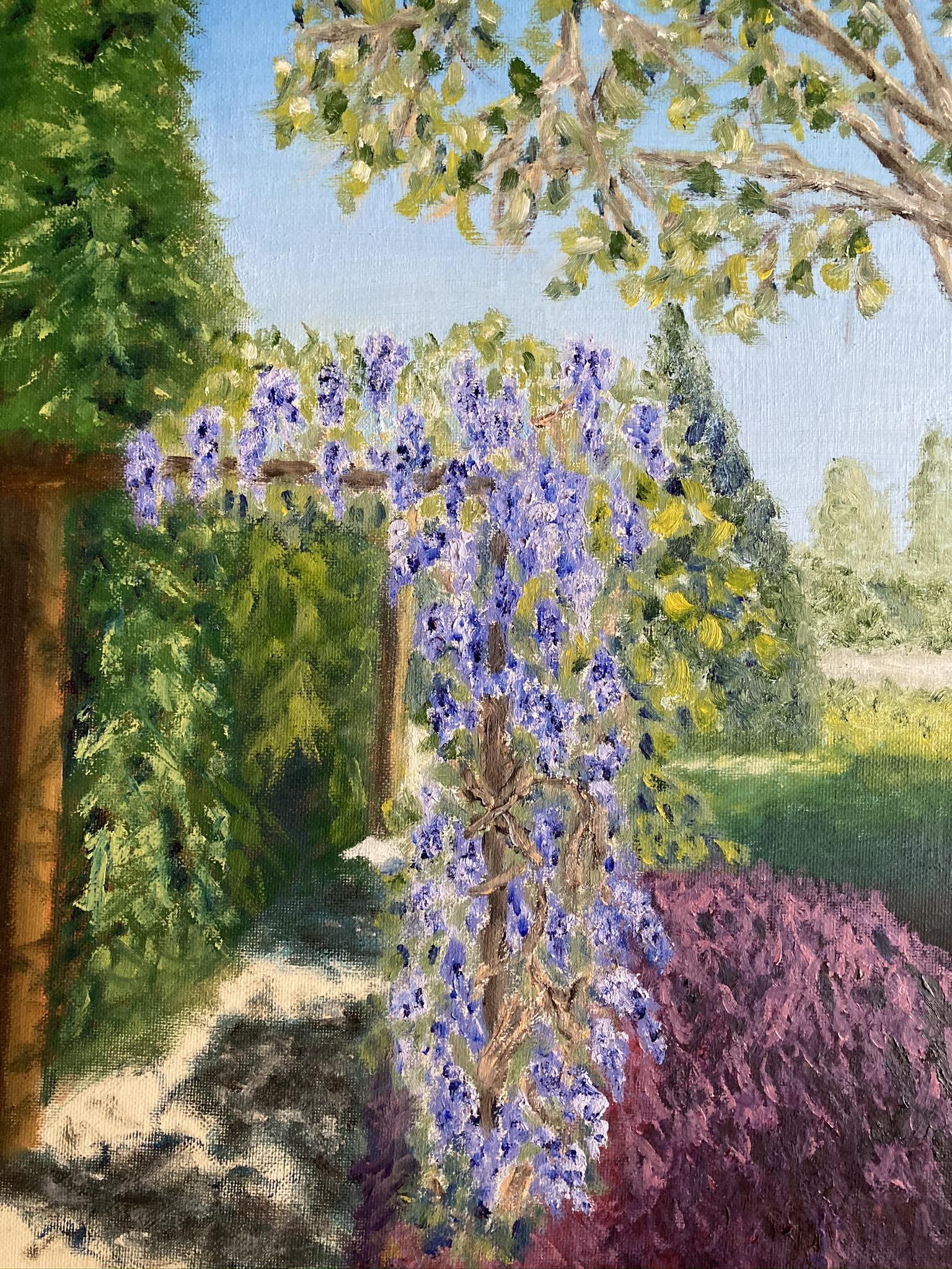 9. Wisteria arbour - Castle Gardens