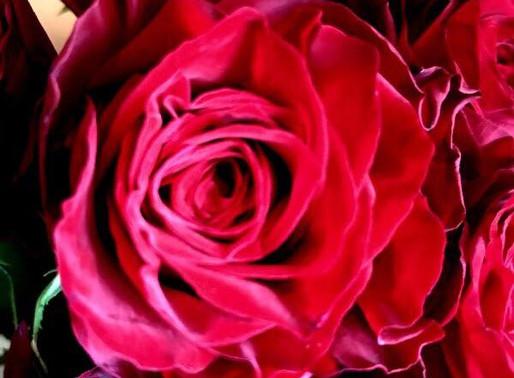 最愛という名の薔薇、アマダ