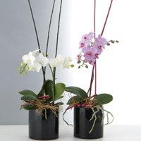 ヨーロッパスタイル デコレーション付きラン花鉢 5,000円