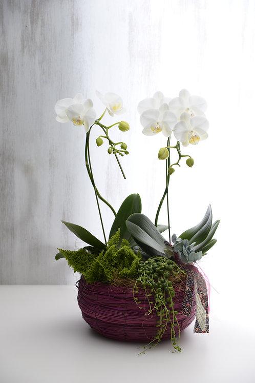 ヨーロッパスタイルラン花鉢 10,000円