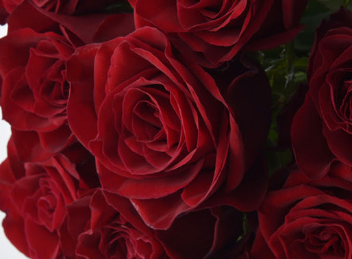 お母様に贈る100本のバラ