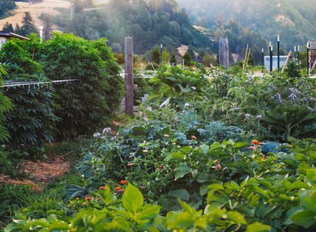 The 'Wine Country' of weed? New California law gives regional title for marijuana branding