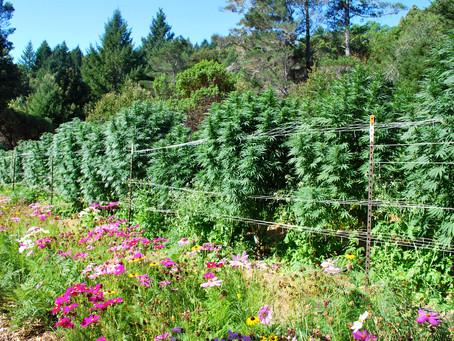 Summary of Proposed Cannabis Appellation Regulations