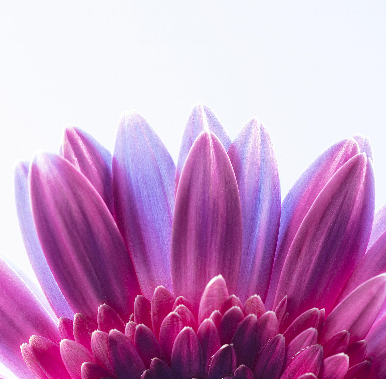 flower ripple0807