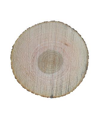 Große Baumscheiben