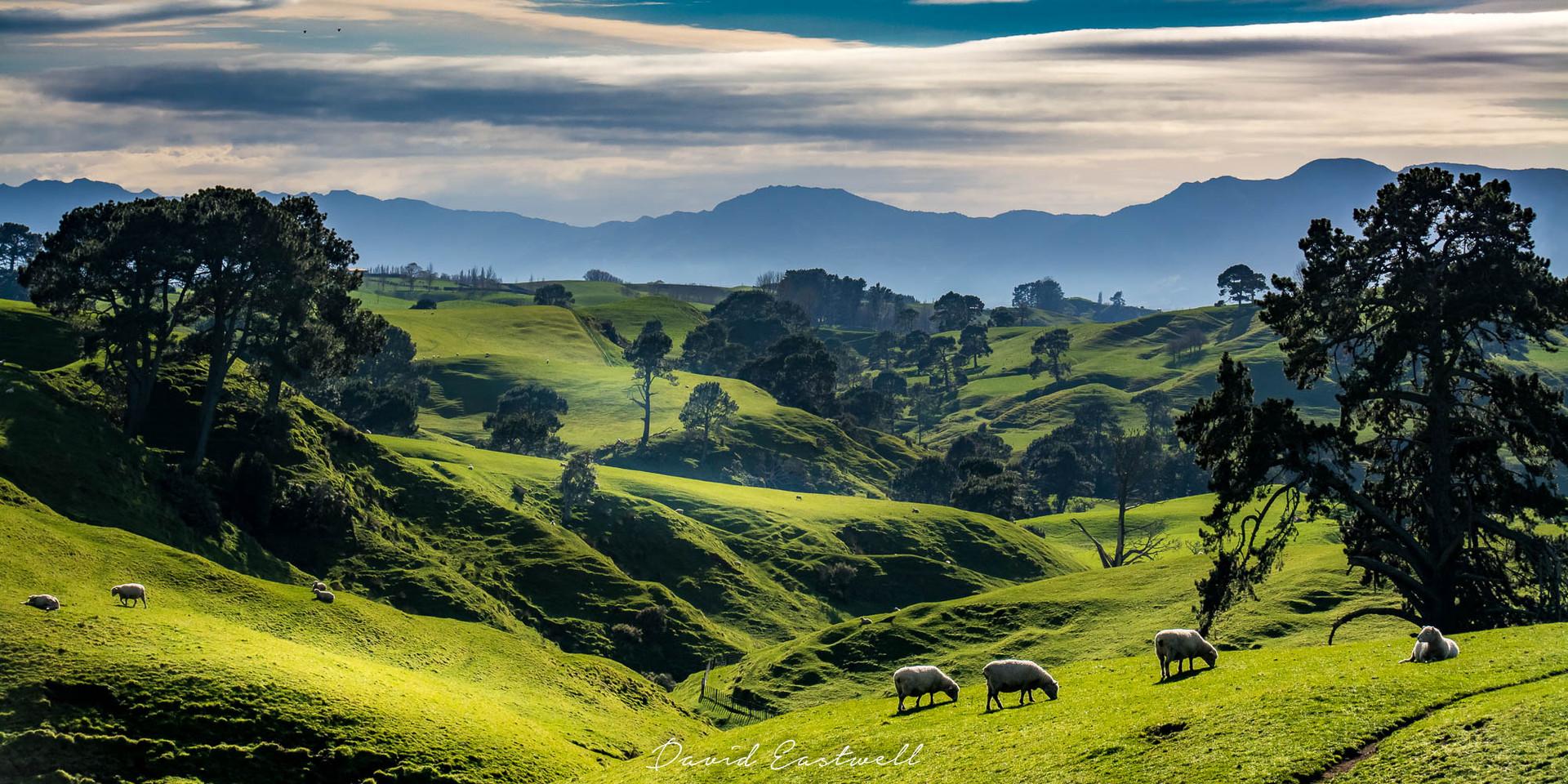 DE- New Zealand - -4223.jpg