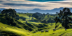 DE- New Zealand - -4223