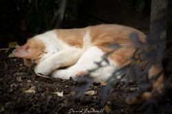Sleeping Kitten 2