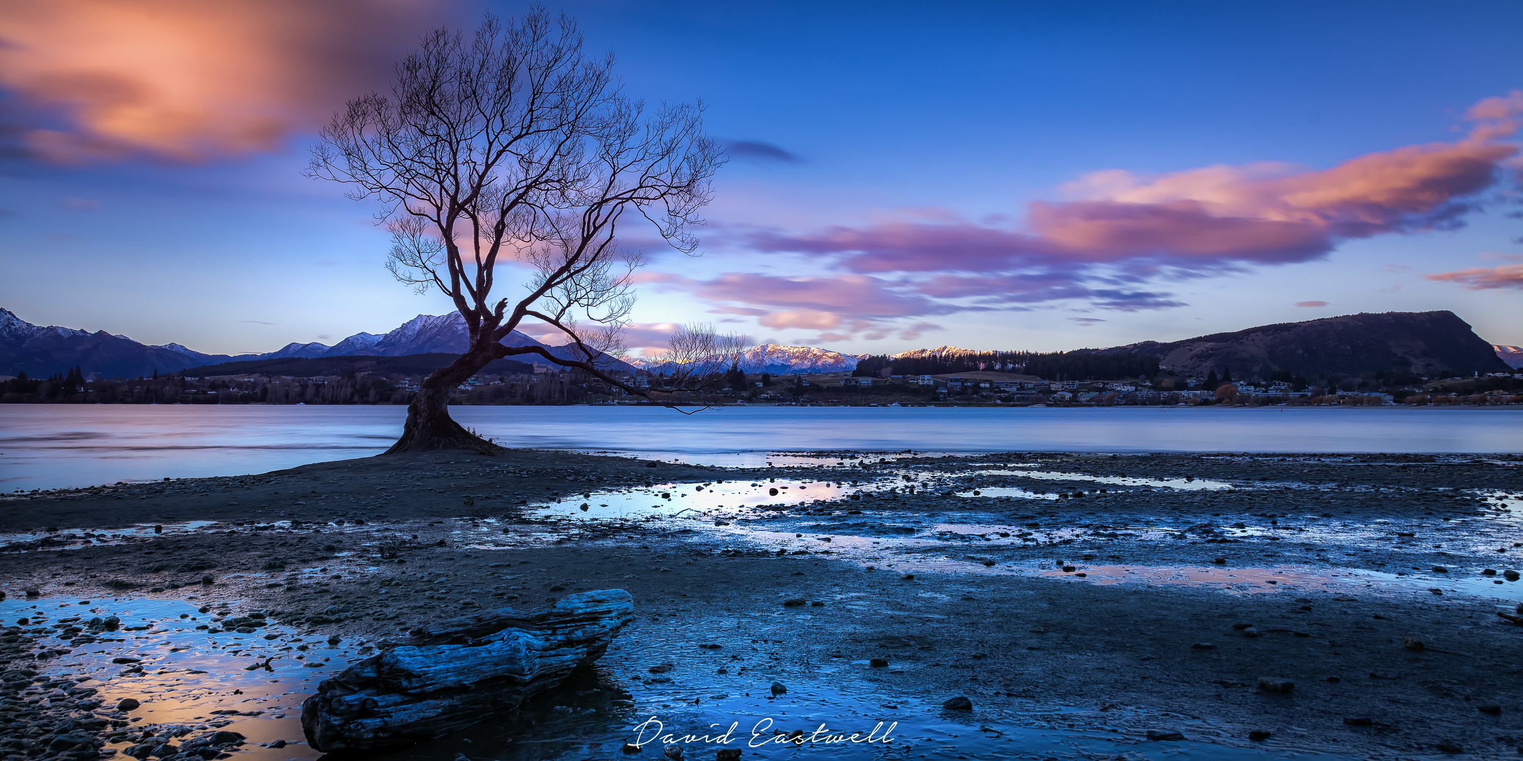 The Wanaka Tree-