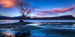 The Wanaka Tree-