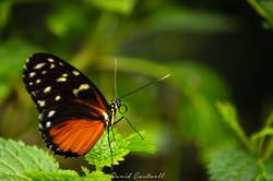 Nature Wildlife-0079