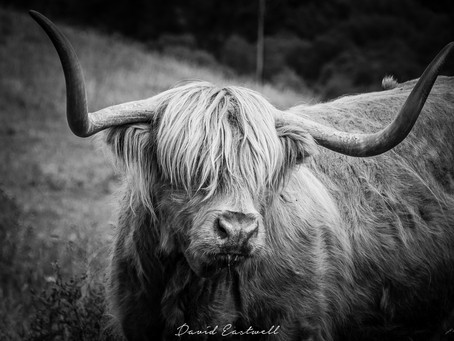 Photographs from the Cairngorms