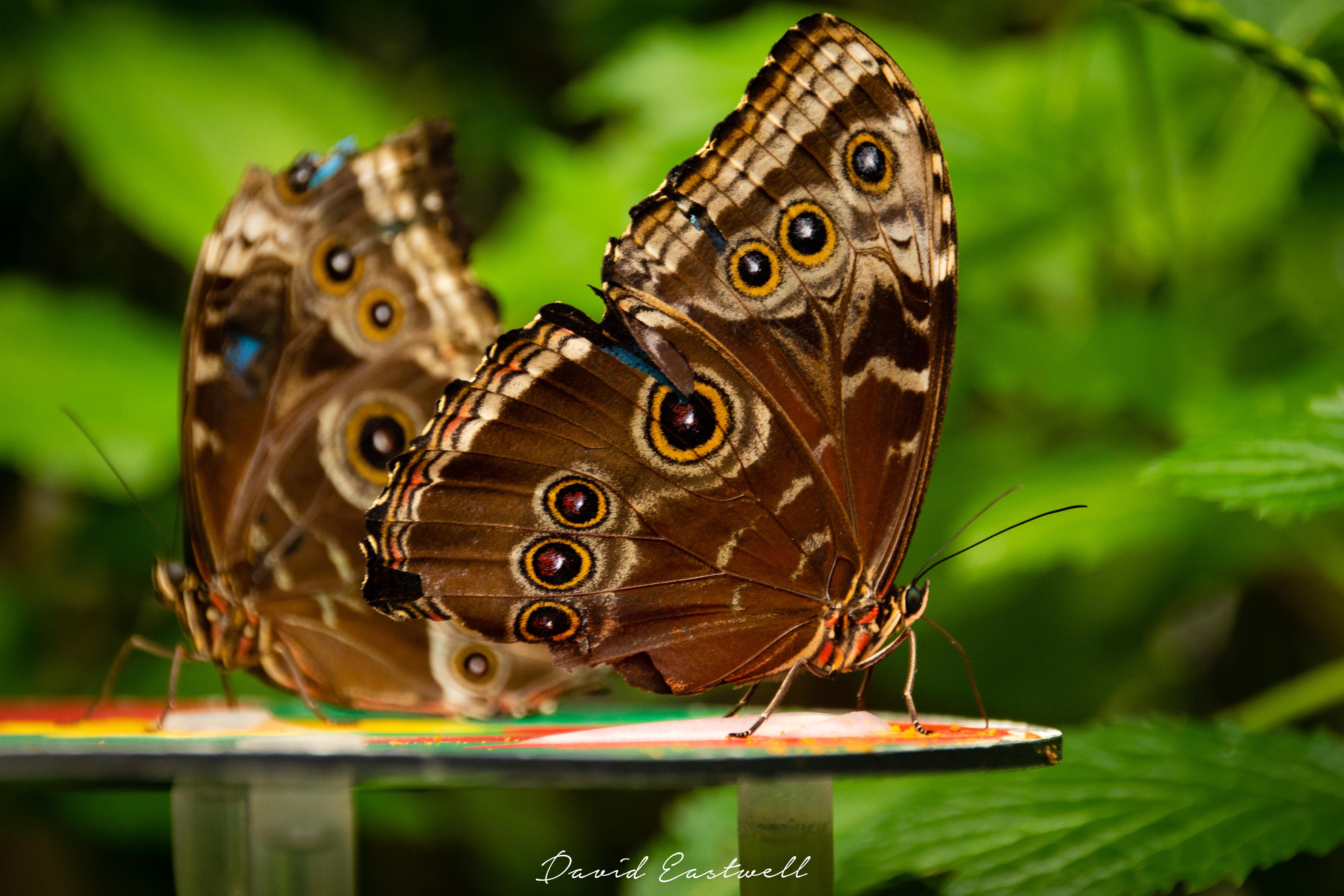 Nature Wildlife-0077