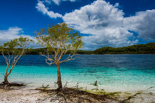 Fraser Island 2 - QLD