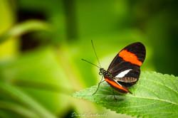 Nature Wildlife-0086