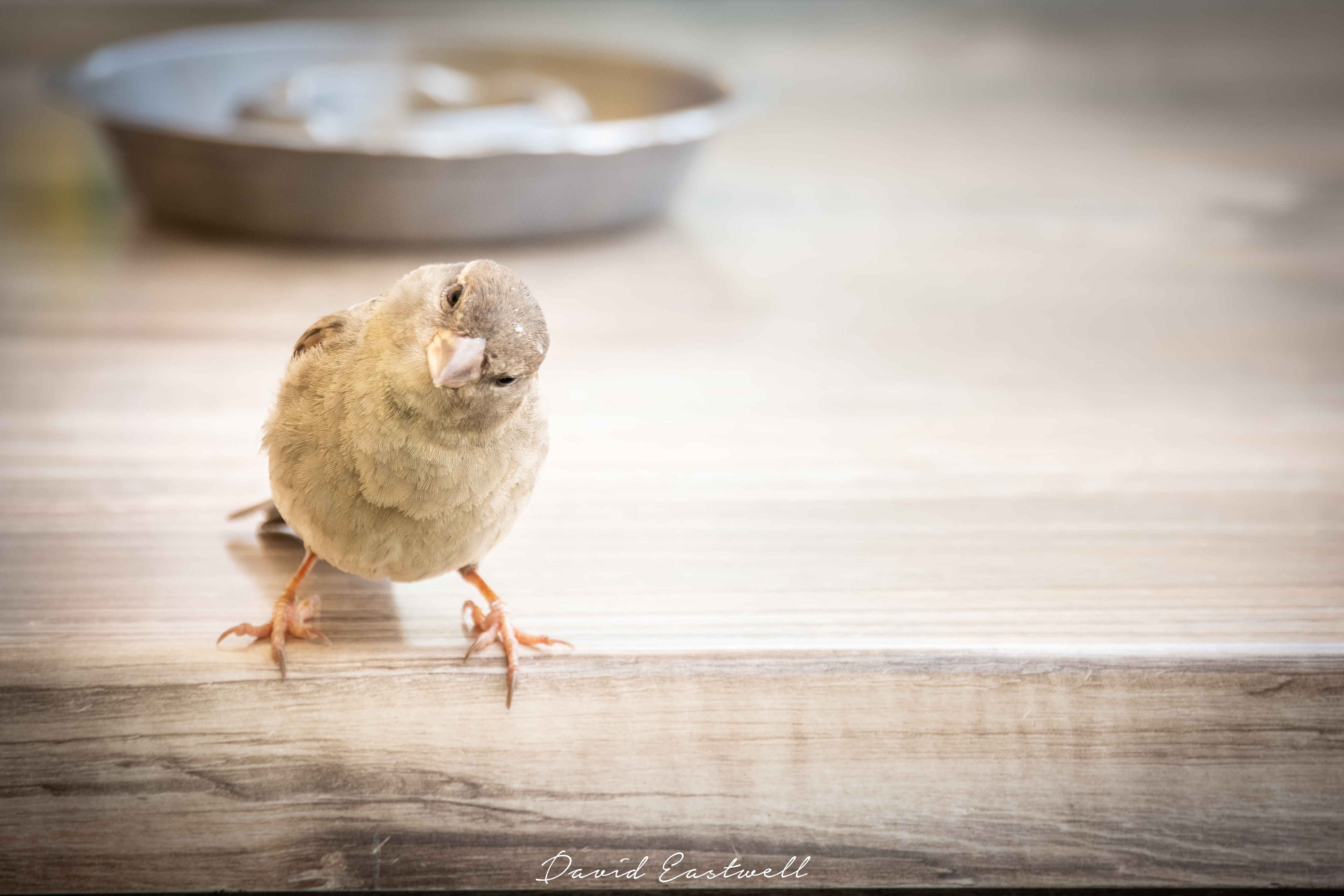 Little Bird 1