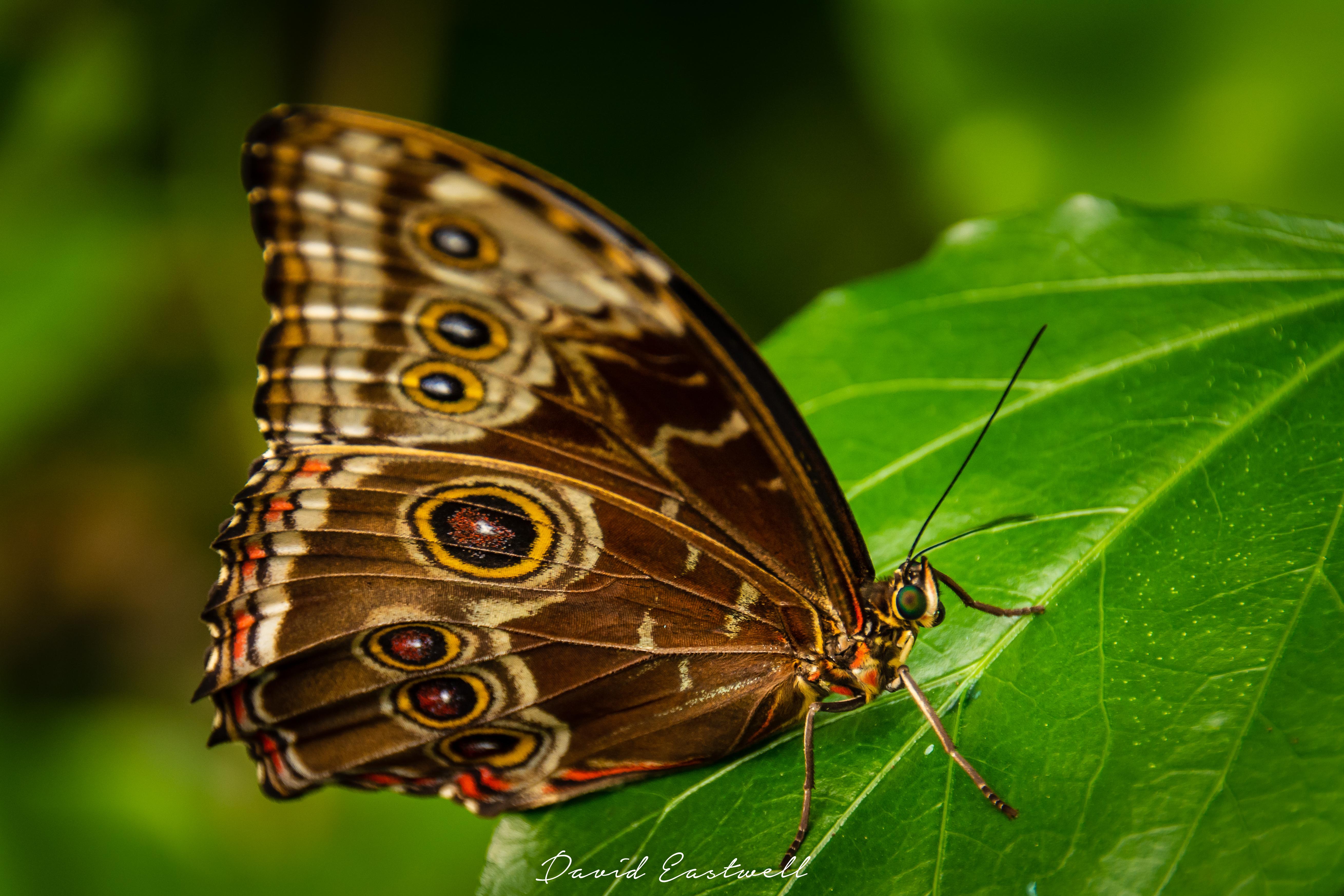 Nature Wildlife-0072