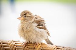 Little Bird 2